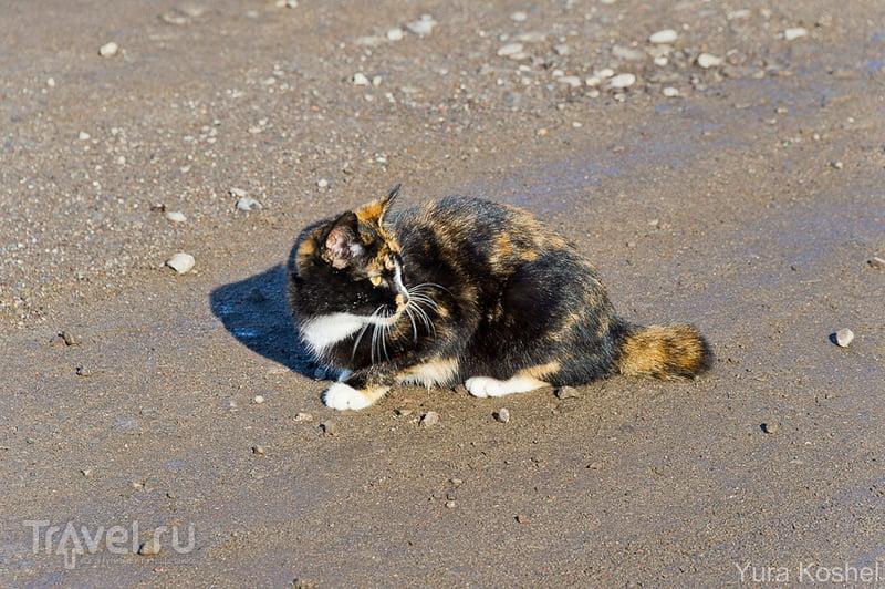 Про белый пароход и курильских кошек / Фото из России
