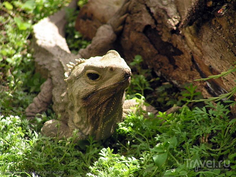 """В стране антиподов. Инверкаргилл - самый южный город, самый быстрый """"Индиан"""", самый древний ящер... / Фото из Новой Зеландии"""