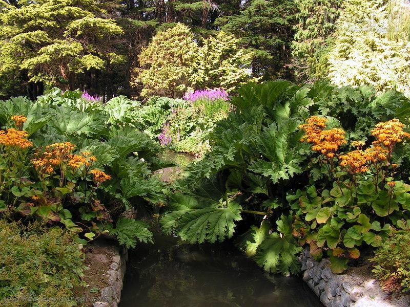 В стране антиподов. Мокрые цветы Инверкаргилла / Фото из Новой Зеландии