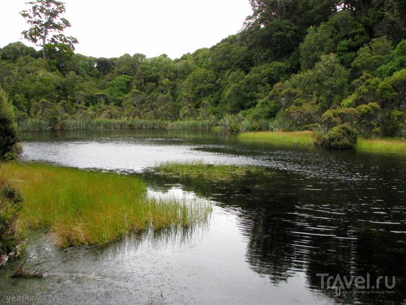 В стране антиподов. Кэтлинс. Реликтовый лес / Фото из Новой Зеландии