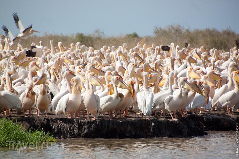 Сенегал и Гамбия. Орнитологический резерват Джудж / Фото из Гамбии