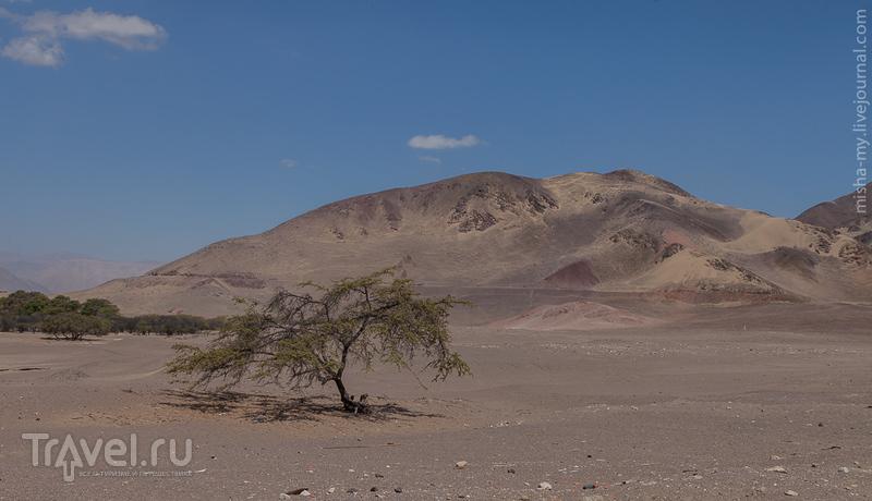 Поездка по Перу. Линии Наски / Фото из Перу