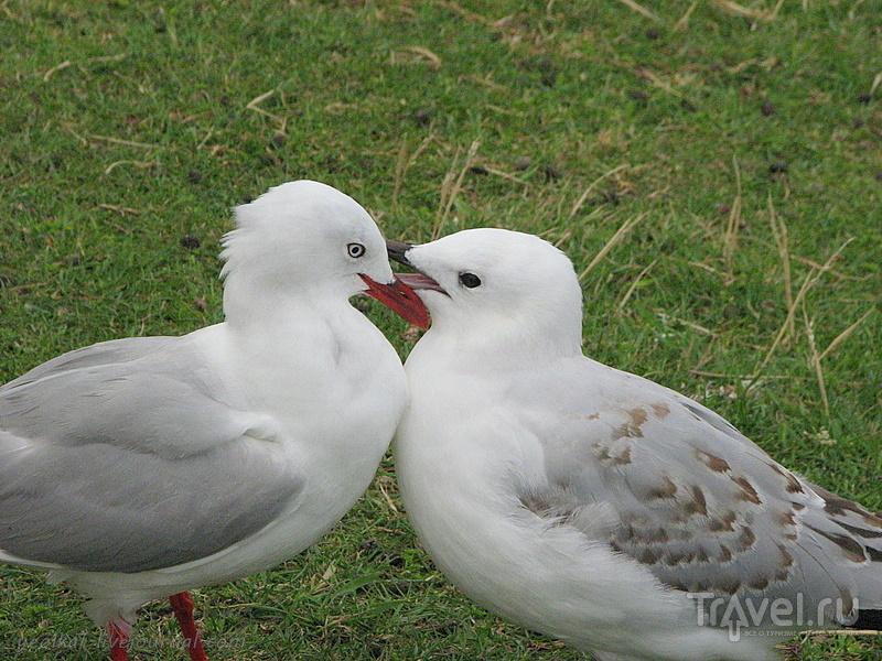 В стране антиподов. Край непуганых идиотов / Фото из Новой Зеландии