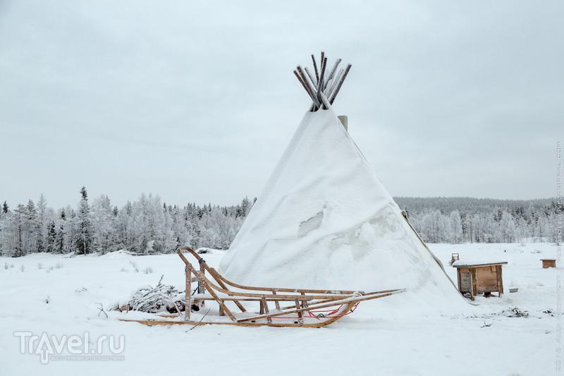 Лапландия. Морозное сафари на собачьих упряжках / Фото из Финляндии