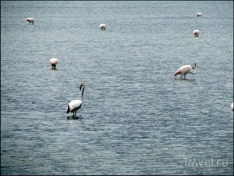 Кальпе. Коста Бланка. Испания. Птицы солёного озера Las Salinas / Фото из Испании
