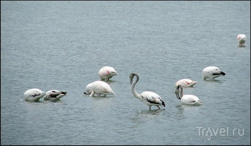 Фото стая фламинго
