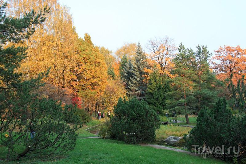 Золотая осень в Ботаническом саду / Фото из России