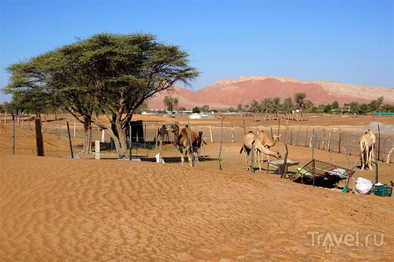 Фото-сессия в Аравийской пустыне / Фото из ОАЭ