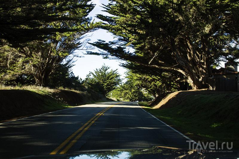 Самые красивые дороги в мире: Pacific Coast Highway / Фото из США