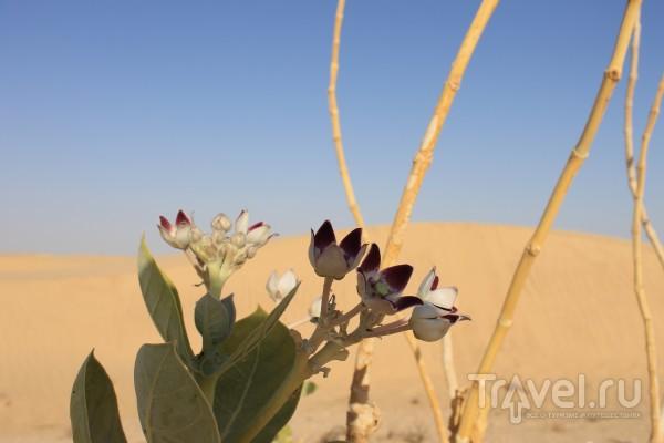 Оман. г.Салала / Оман