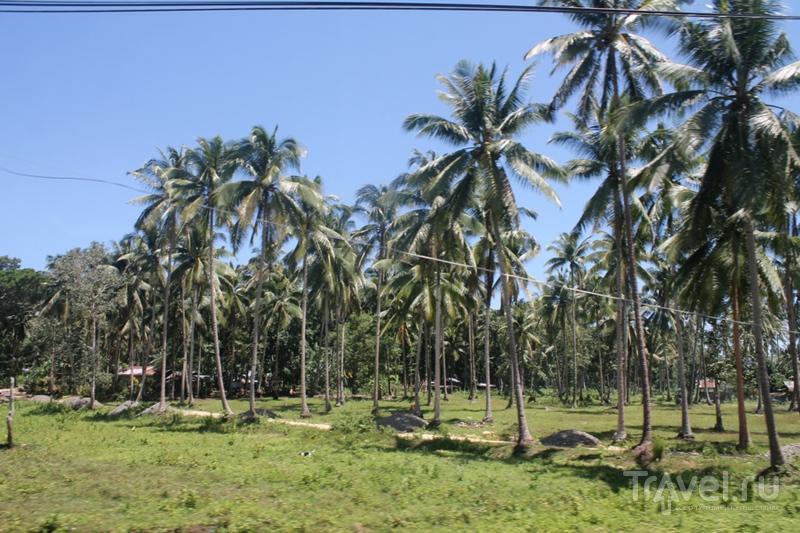 Филиппины: остров Бохоль / Филиппины
