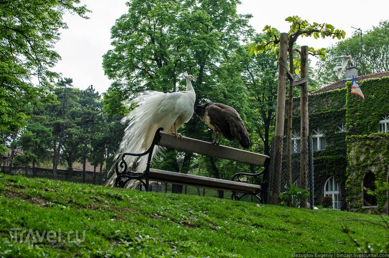 Белградский зоопарк / Фото из Сербии