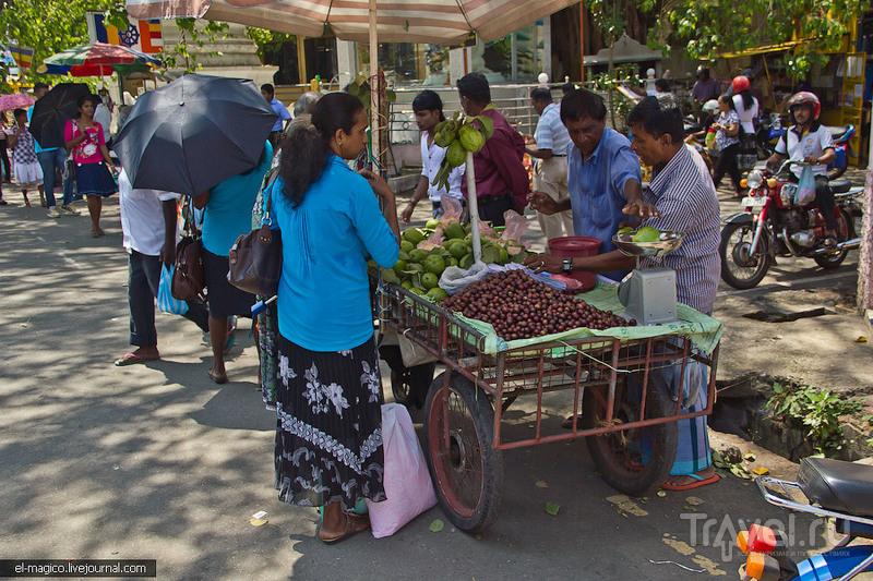 Рыночное исследование Шри-Ланки / Фото со Шри-Ланки