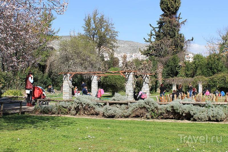 Виртуальная прогулка по ботаническому саду Диомидиса / Фото из Греции