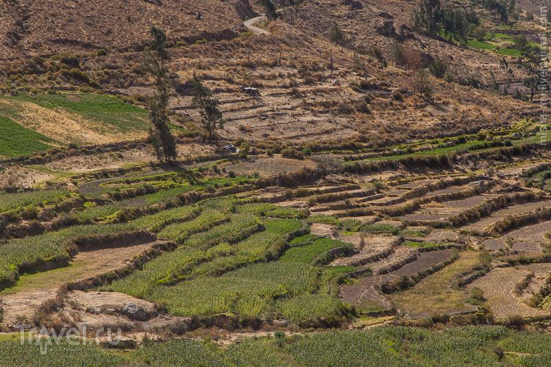 Поездка по Перу. Дорога в каньон Колка / Фото из Перу