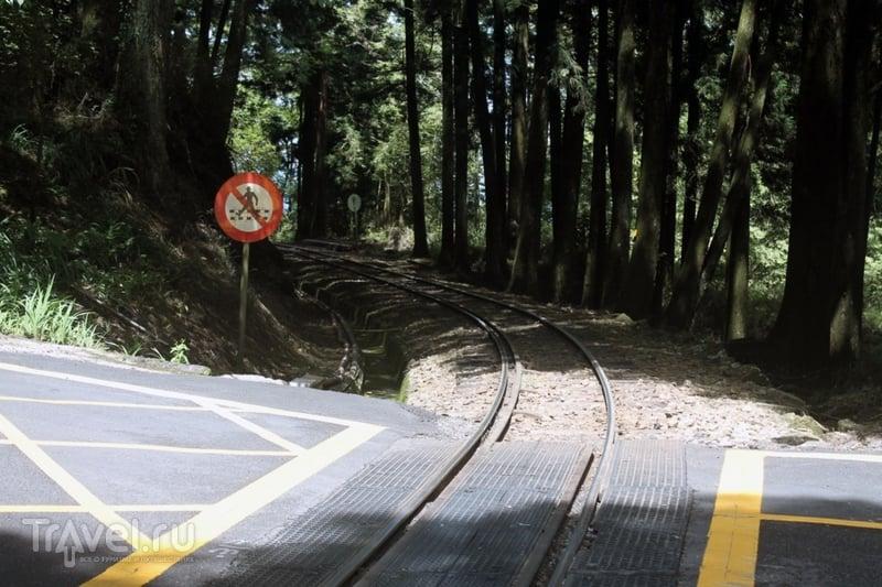 Тайвань: национальный парк Алишань и город Цзяи / Тайвань