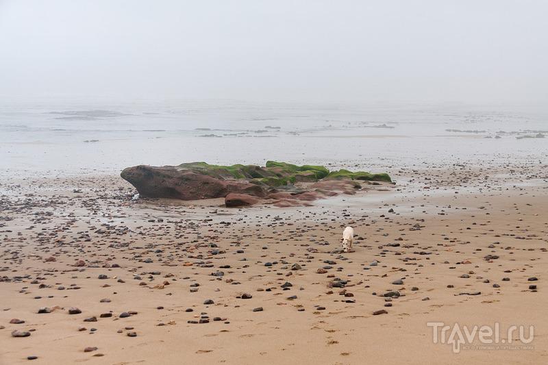 Марокканский бомж-вояж. Легзира в тумане. Сиди-Ифни / Фото из Марокко