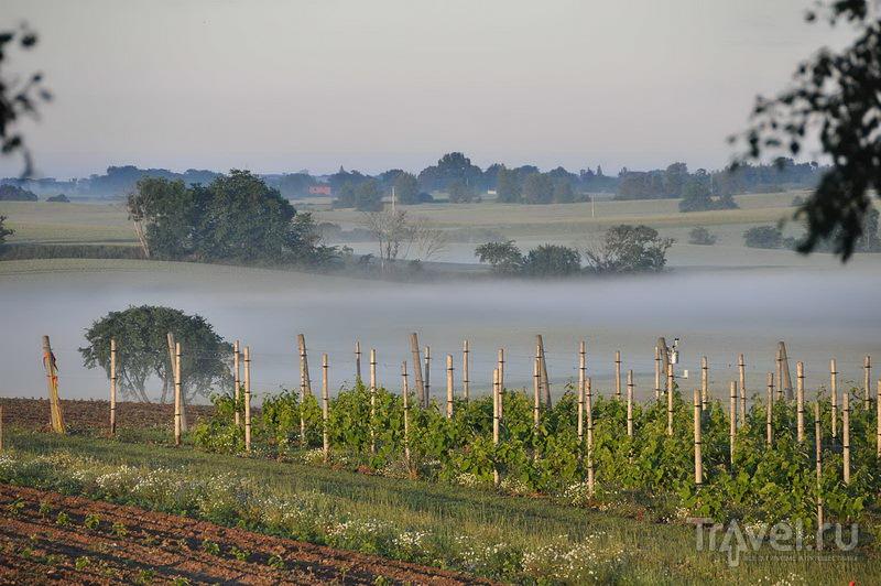 Не ожидали увидеть виноградники в Швеции?