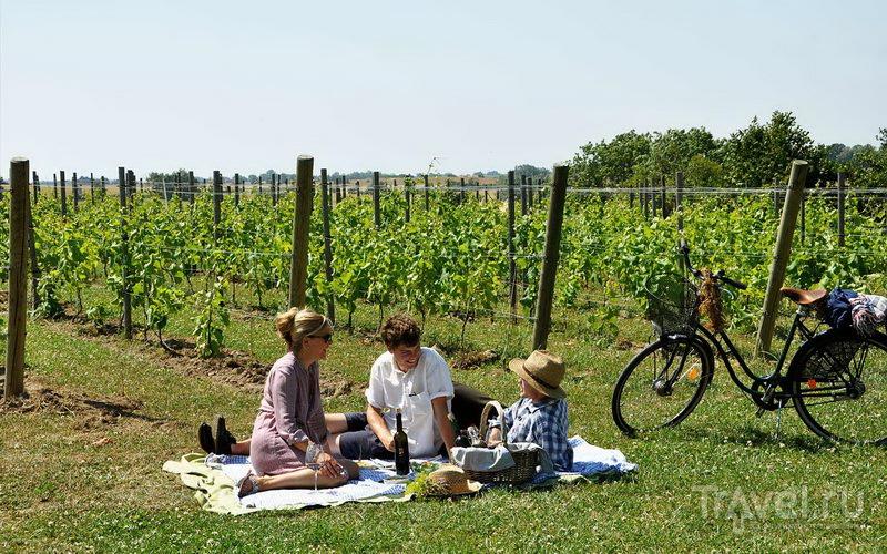 Пикник среди виноградных лоз