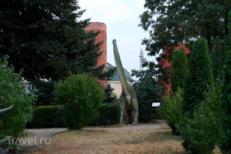 Сибиу, Музей естественной истории / Румыния