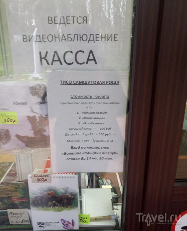 Тисо-самшитовая роща или путь настоящего джедая / Фото из России