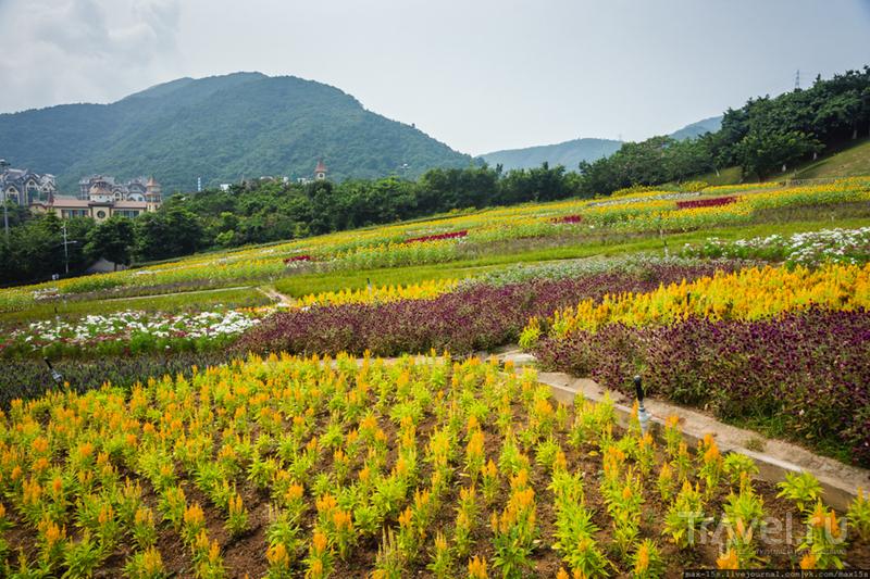Китай, Шэньчжэнь: парк OCT East, Чайная долина / Фото из Китая