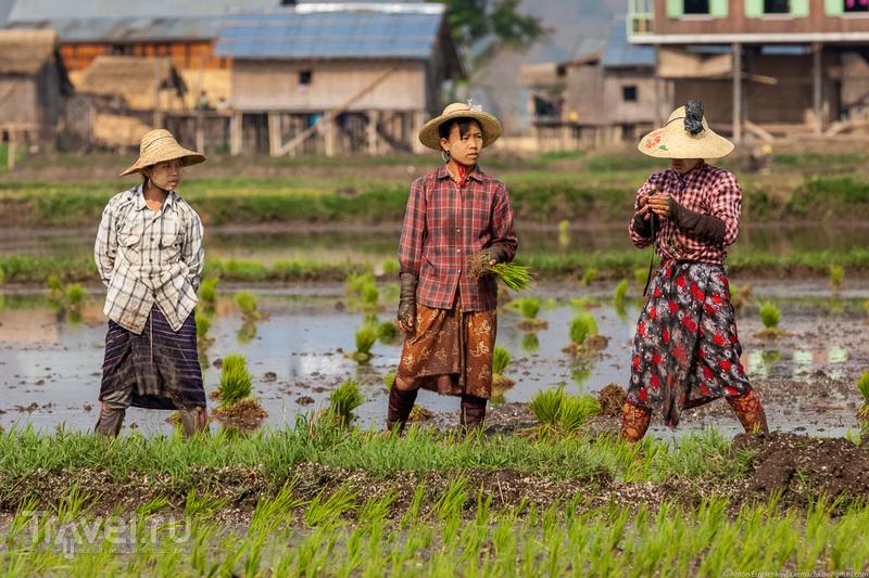 Бирма. Огороды озера Инле / Фото из Мьянмы
