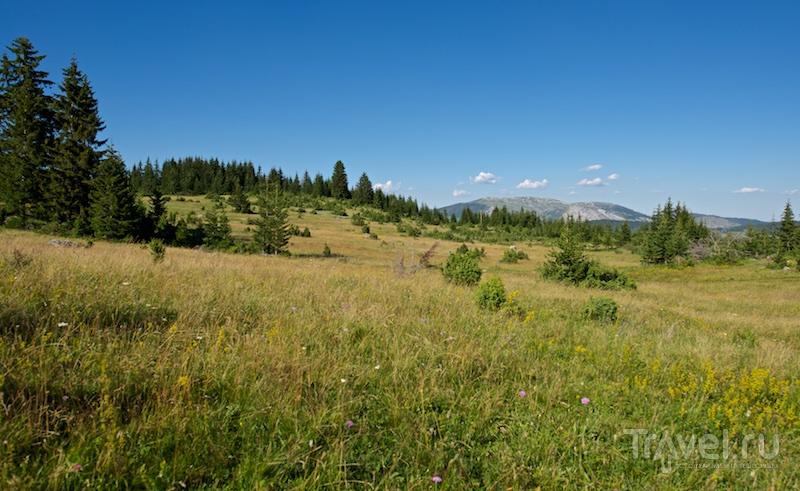 Черногория. Один день в Дурмиторе / Фото из Черногории