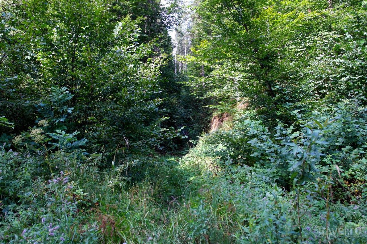 Бран - как пойти гулять в горы / Румыния