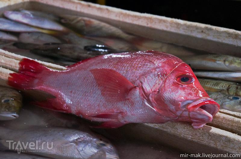 Рыбаки и рыба. Джимбаран, Бали / Фото из Индонезии
