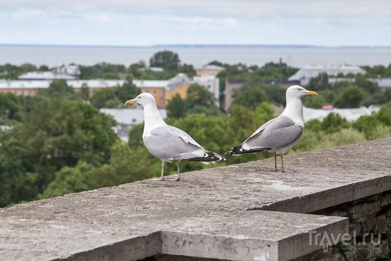 Таллин. Ваналинн и Тоомпеа / Фото из Эстонии