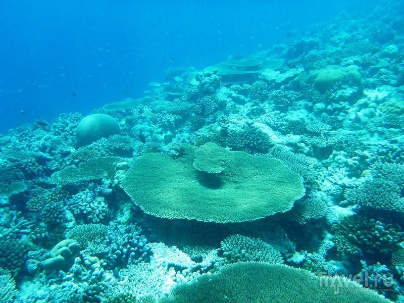 В погоне за китовой акулой / Фото с Мальдив
