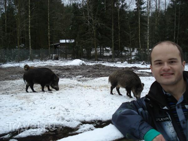 Зоопарк Эхтяри / Финляндия