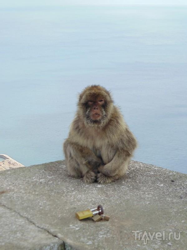 Гибралтар снаружи и изнутри / Фото из Гибралтара
