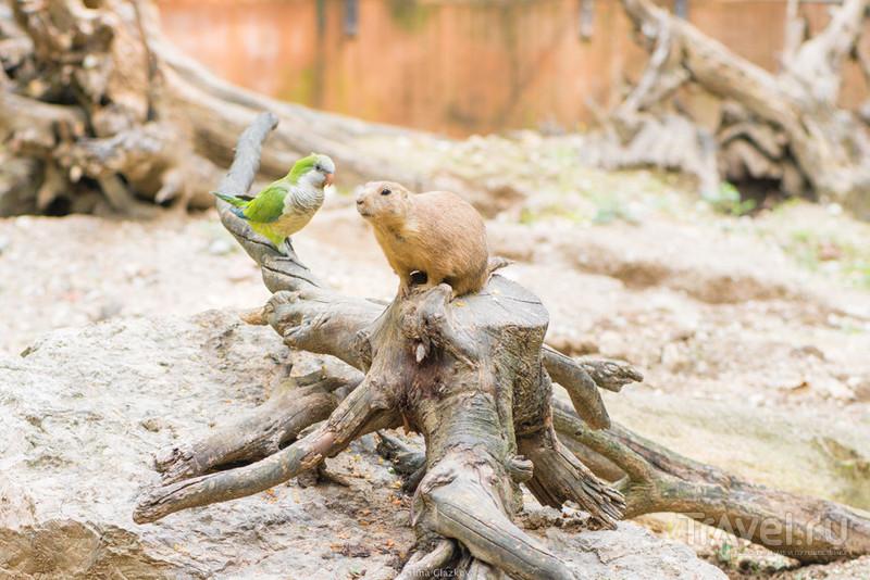 Сафари парк на озере Гарда (Parco Natura Viva) / Италия