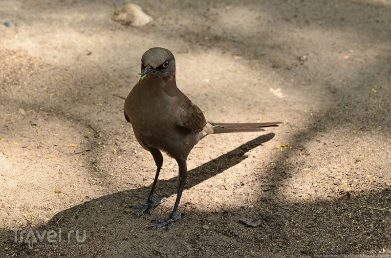 Национальный парк Тарангире / Фото из Танзании