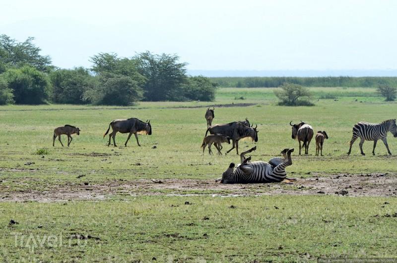 Озеро Маньяра и окрестности (Танзания) / Фото из Танзании