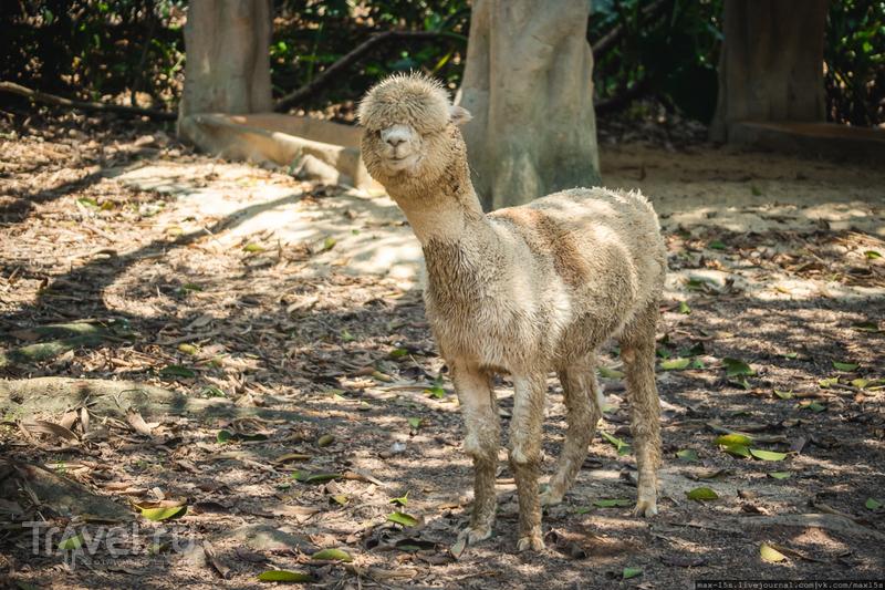 Китай, Гуанчжоу: сафари-парк Chimelong, автомобильное / Фото из Китая