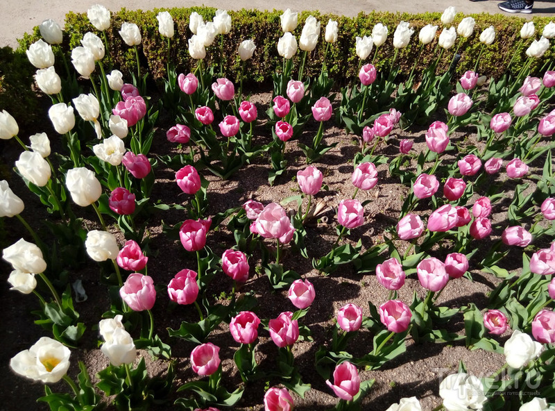 Весеннего Мадрида вам в ленту! (Real Jardín Botánico) / Испания