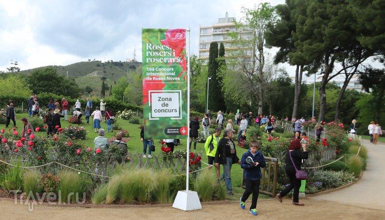 Войны алых и белых роз в Барселоне / Испания