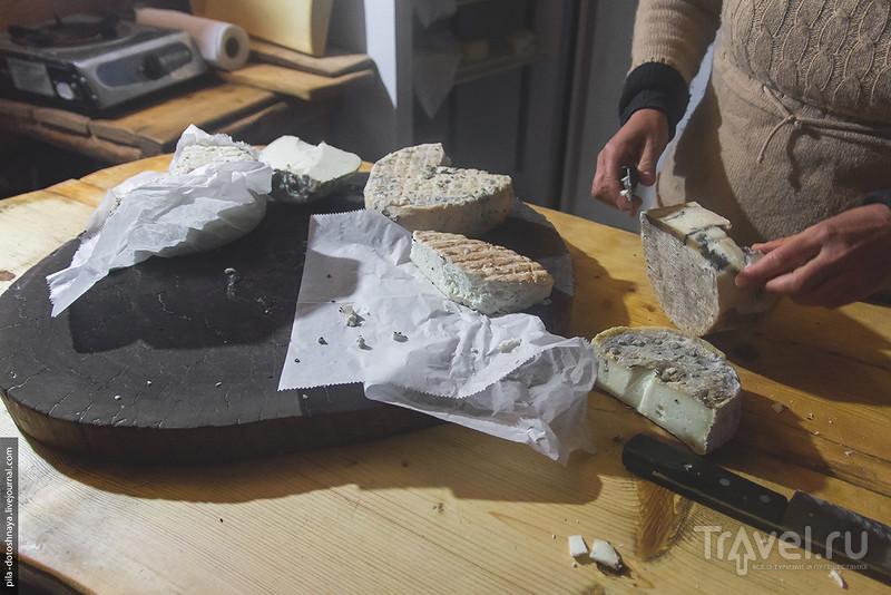 Сырная ферма в горах Израиля / Израиль