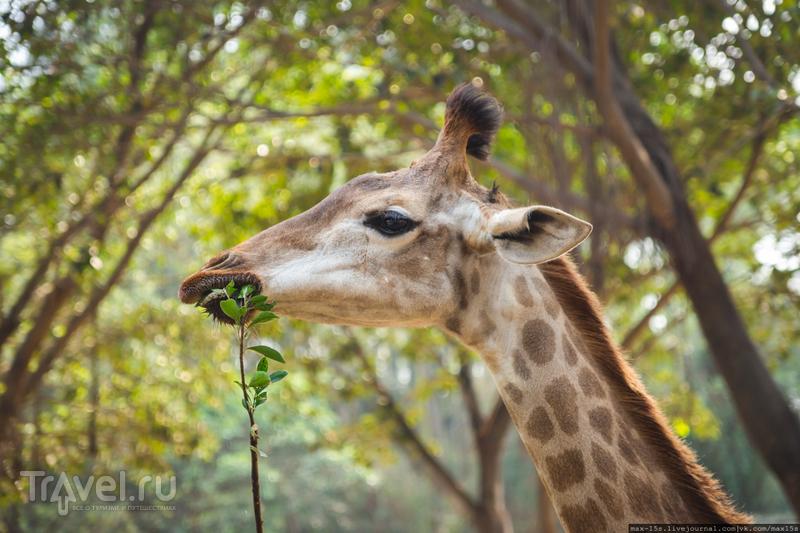 Китай, Гуанчжоу: сафари-парк Chimelong, пешеходное / Фото из Китая