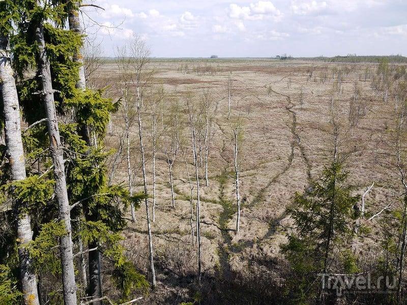 На грязеходном жижадаве в Плавницкое болото / Россия