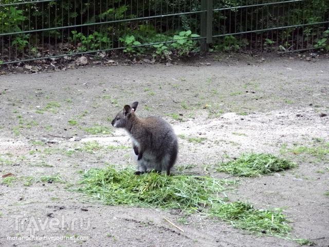 Черепашьи бега в зоопарке Коркеасаари, и не только это / Финляндия