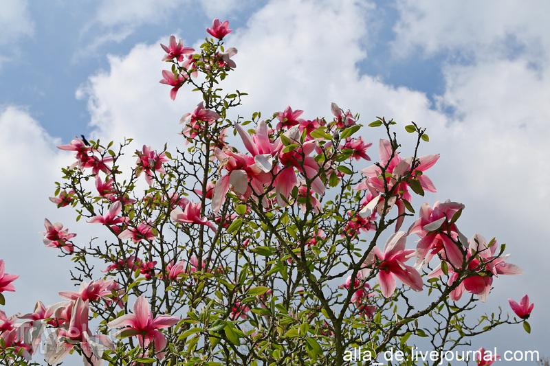 Остров цветов Mainau / Германия
