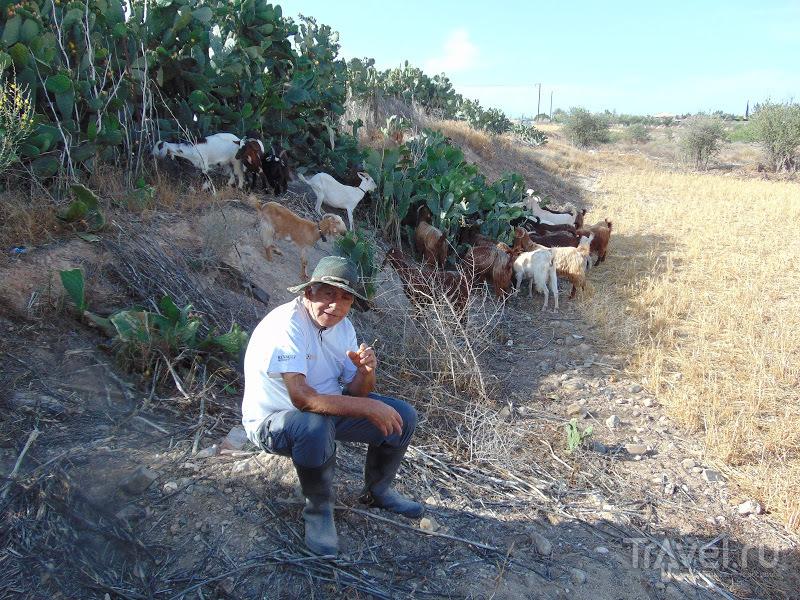 Кипрская пастораль, или путешествие за халлуми / Фото с Кипра