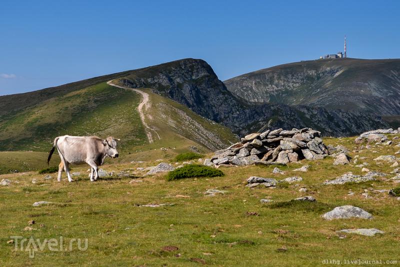 Высшая точка Балканских гор / Фото из Болгарии