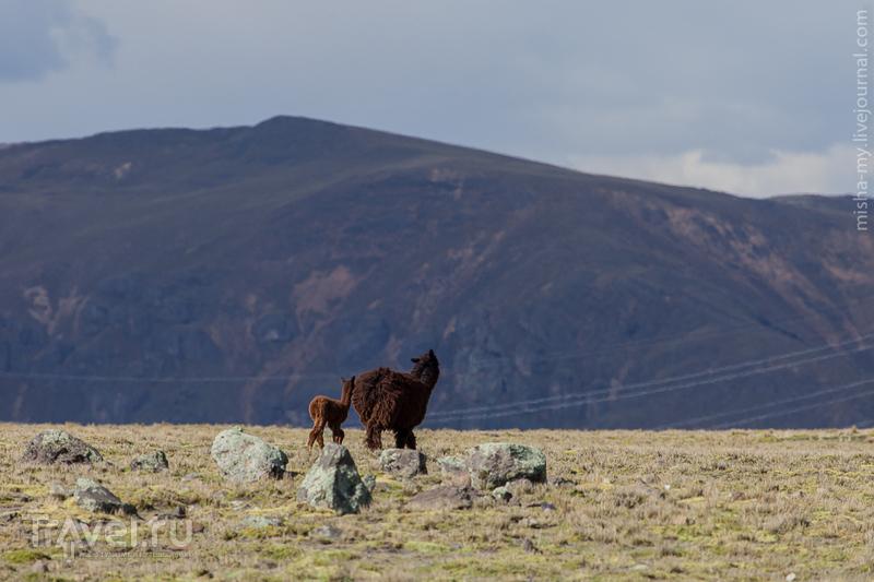 Поездка по Перу. Возвращение в Наску / Фото из Перу