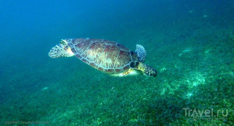 Mundo Maya. Мексика. Гигантские черепахи пляжа Акумаль / Фото из Мексики