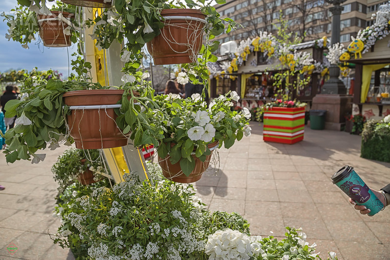 """Фестиваль """"Московская весна"""", 2016 / Фото из России"""